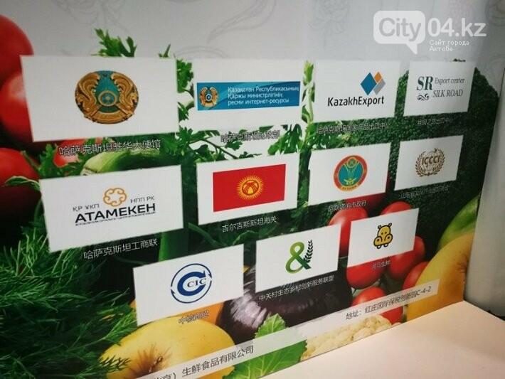 Казахстан презентовал в Китае свой экспортный потенциал в сфере сельского хозяйства, фото-1