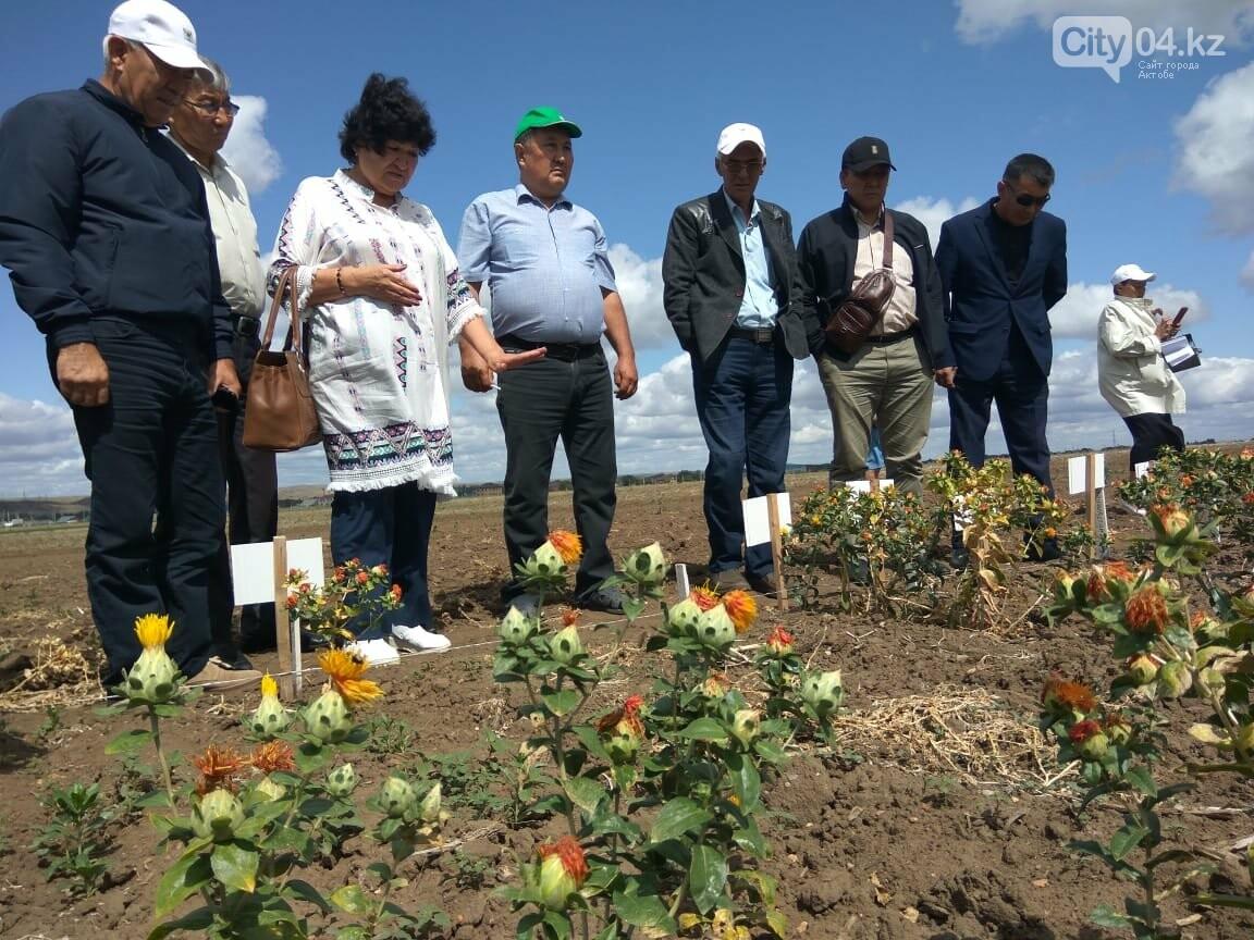 Ақтөбе облысының аграршылары мақсары өсіруін меңгеруде, фото-1