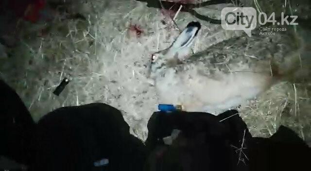 Охотника на зайцев задержали инспекторы в Уиле, фото-1