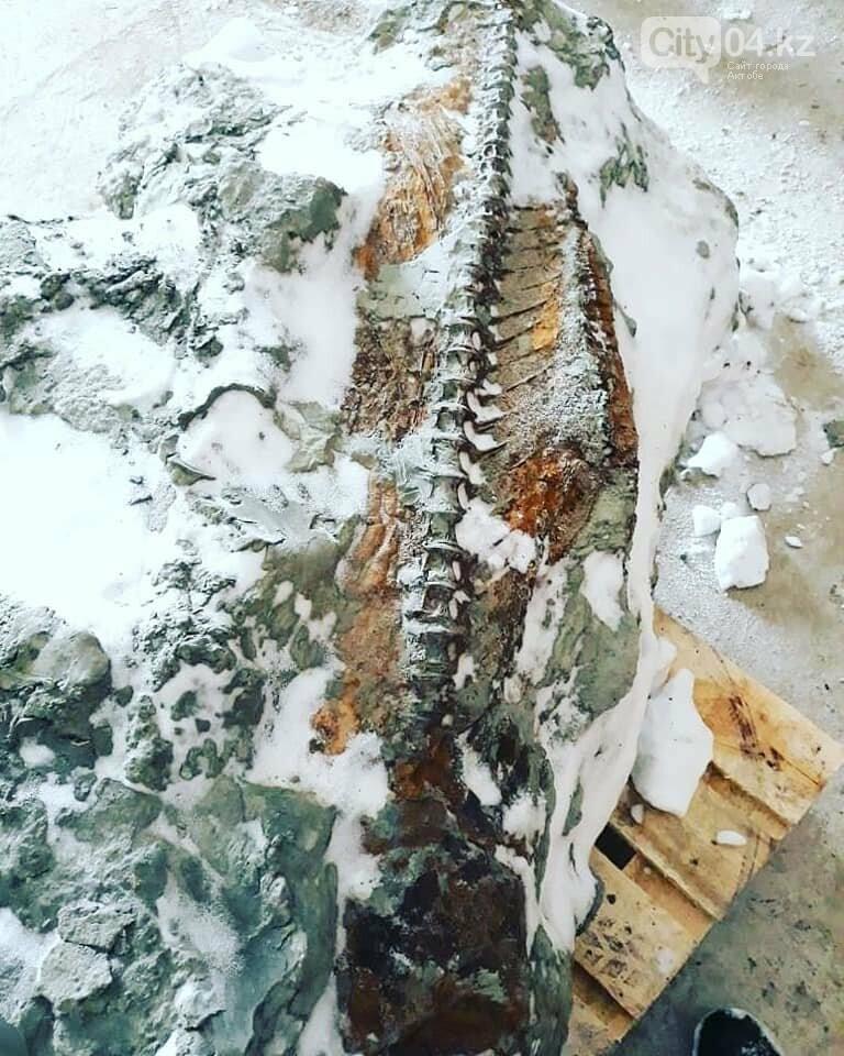 В карьере ССГПО нашли скелет рыбы кайнозойской эры, фото-1